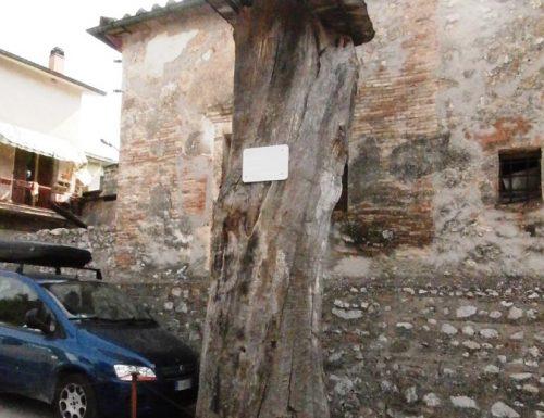 Castagno di 224 anni diventa un obelisco
