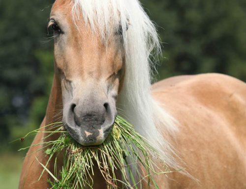 """Cavallo """"rubacuori"""" processato in Pretura"""
