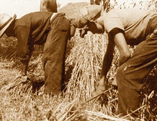 Orvieto 1945: le Leghe contadine sfamano il Nord Italia