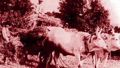 San Gemini, sangemini, contadini sciopero