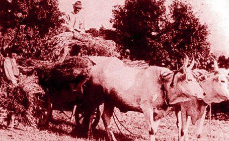 San Gemini 1913, venti giorni di sciopero dei contadini per il Patto Colonico