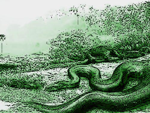 """1971: a Collestatte contadina incontra  un rettile """"mostruoso"""""""