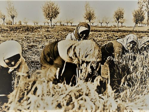 Perugia 1908, contadina muore assiderata in un campo